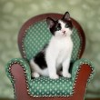 Little Kitten Sitting in a Chair - Stock Photo