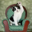 Little Kitten Sitting in a Chair — Stock Photo