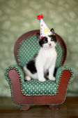 Birthday Kitten Sitting in a Chair — Stock Photo