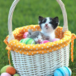 Adorable Kittens in a Holiday Easter Basket — Stock Photo