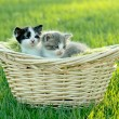 Kittens Outdoors in Natural Light - Stock Photo