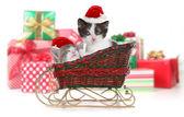 Cute Kittens in a Christmas Santa Sleigh — Stock Photo
