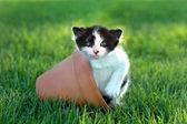 Little Kitten Outdoors in Natural Light — Stock Photo
