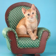 Little Orange Tabby Kitten in Studio — Stock Photo