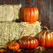 Fall Themed Scene With Pumpkins on Wood — Stock Photo