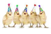 Yellow Baby Chicks Singing Happy Birthday — Stock Photo