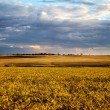 Summer landscape - wheat field - Stock Photo