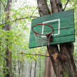Basketball basket in the wood - Foto de Stock