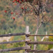 Autumn in the Carpathian Mountains - Stockfoto
