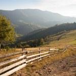 Autumn landscape in the Carpathian mountains — Stock Photo #16969883
