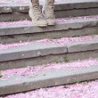 Sakura petals on the ground — Stock Photo