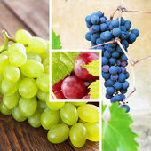 Collection of grapes close-up photos — Stock Photo