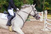 在竞争上的马 — 图库照片