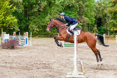 Wroclaw, Poland: SEPT 29 - Horse trials in Wroclaw — Stock Photo