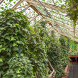 Stock Photo: Hothouse in botanical garden