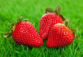 Fresh strawberries on green grass — Stock Photo