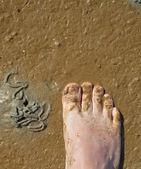 Les pieds dans l'estuaire — Photo