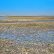 Wadden sea — Stock Photo