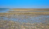 Wadden sea — Stock Photo