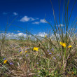 Stock Photo: Dune grass