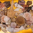 Foto Stock: Collection of seashells for backgrounds