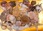 Une collection de coquillages pour les arrière-plans — Photo