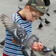 Boy is feeding the birds - Stockfoto