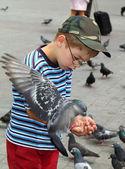 Ragazzo è nutrire gli uccelli — Foto Stock