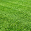 Green grass background — Stock Photo #13812478