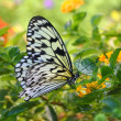 Butterfly on yellow flower - Stock Photo