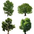 Stock Photo: Trees isolated