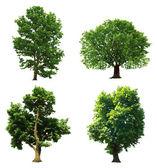 Collectie groene bomen. vectorillustratie — Stockvector