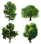 Collection green trees. Vector illustration — Stok Vektör