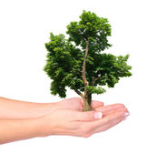 Hands and tree isolated — Stock Photo