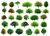 Collection green trees — Stockvector