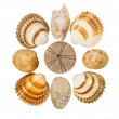 Collection of seashells — Stock Photo