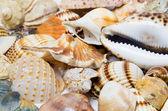 Backgrond van zeeschelpen — Stockfoto