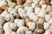 Scattering of river shells with small depth of field — Stock Photo