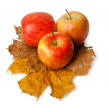 Three ripe fresh red apples on maple and oak leaves — Stock Photo