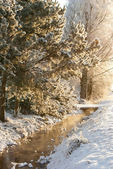 Small stream and snow-covered pines — Stock Photo