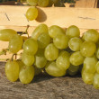 Grapes — Stock Photo #25192667