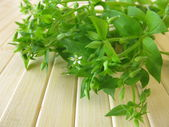 Wild vegetables chickweed — Stock Photo