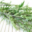 Bouquet of mugwort — Stock Photo