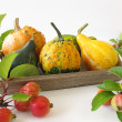 Autumnal decoration with crab apples and ornamental gourds — Stock Photo
