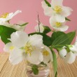 Blooming summer jasmine in the vase — Stock Photo