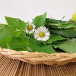Wild herbs in basket — Stock Photo