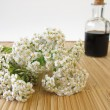 Herbal tonic with yarrow — Stock Photo #37995449