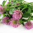 Bouquet of red clover — Stock Photo #40452367