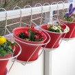 Spring flowers on the balcony — Stock Photo #43357147