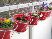 Spring flowers on the balcony — Stock Photo